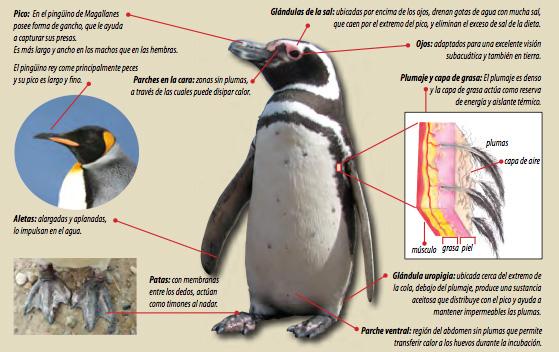 pingüinos en Punta Tombo fundación GPS PDF
