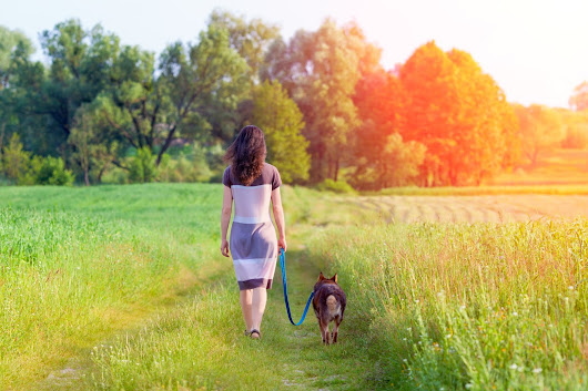 January Is National Walk Your Pet Month - Tips And Ideas For Better Pet Walking Experiences