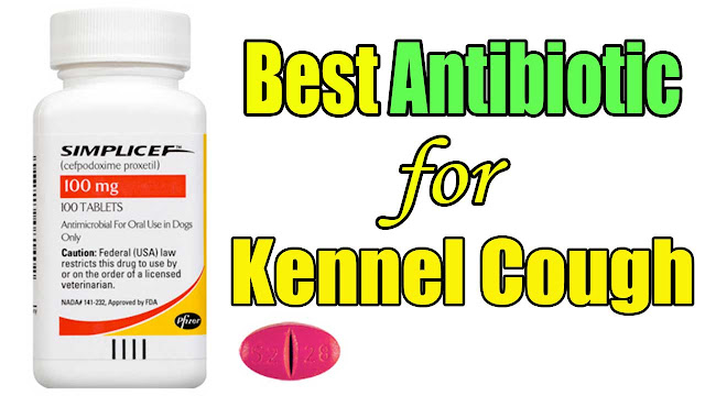 best-antibiotic-for-kennel-cough-in-dogs