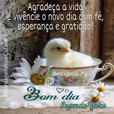 Agradeça a vida  vivêncie o novo dia com fé,  esperança e gratidão!  Bom Dia!  Segunda-Feira