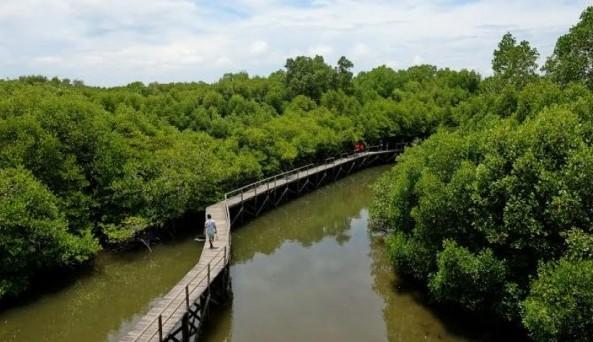 Hutan Mangrove Pantai Bedul