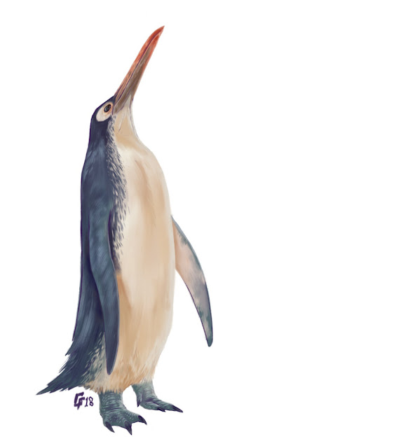 New fossil further resolves bauplan of extinct giant penguins