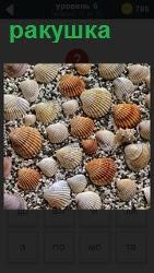 В воде на песке расположились ракушки разные по величине, словно грибы после дождя