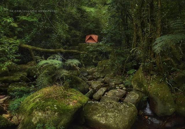 මෙරට වනයේ අධ්යාත්මීක සැනසීම ලබන බටහිර භික්ෂූන්  ☸️🙏🧘♂️ (Hillside Hermitage) - Your Choice Way