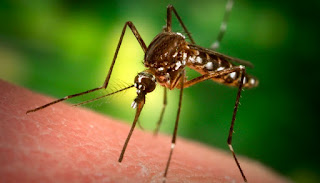 ¿Qué medidas aplicar para control del mosquito Aedes Aegyp?