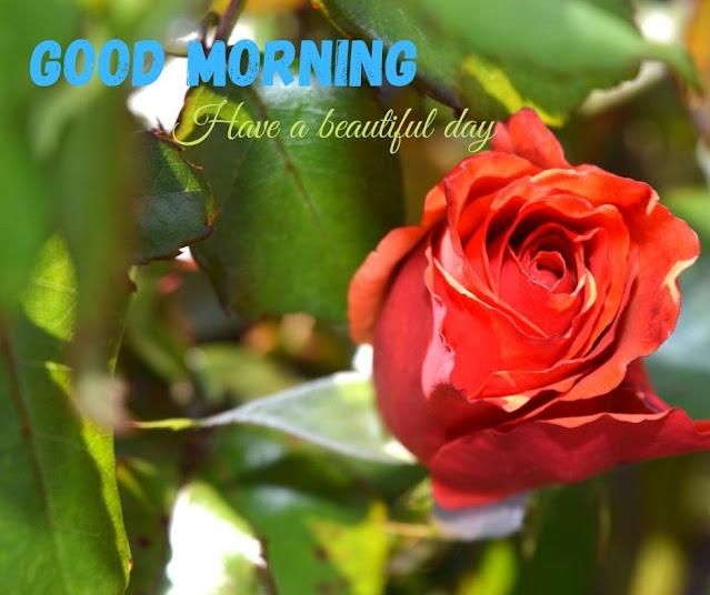good morning image in flower