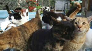 Cyprus cats out in the cold as covid pandemic bites