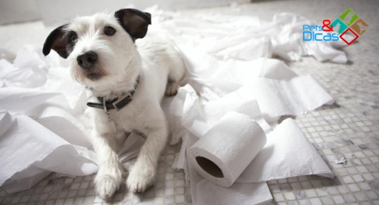 Cão picou papel higiênico
