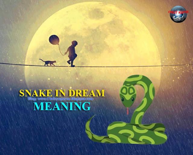 Snake in Dream Meaning   Mơ thấy Rắn nghĩa là gì