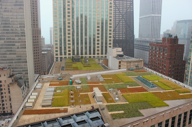 Rooftop gardens and skyscrapers in downtown Chicago by Hello Lovely Studio