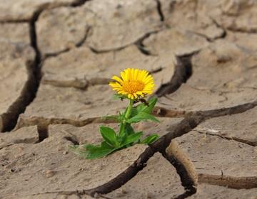 Cuento Milagro flor en piedra otras vidas