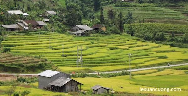 Mùa lúa chín trên cao nguyên Đồng Văn, phượt Hà Giang 2013.