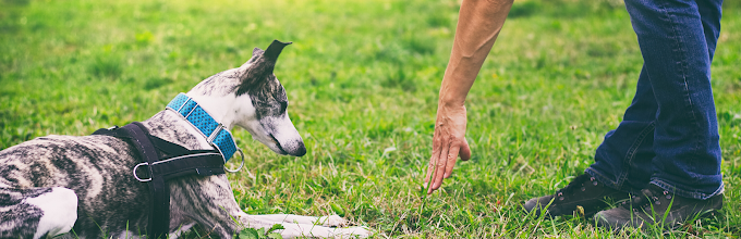 Reliable and effective training tips and rules for Dog obey