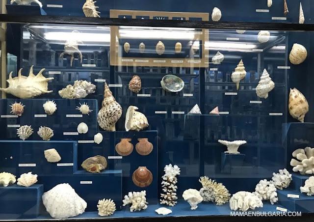 fauna marina Museo Ciencias Naturales Sofía Bulgaria