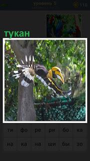 В лесу цветной тукан порхает крыльями и осуществляет полет