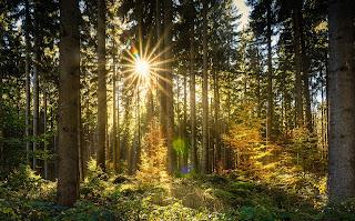 Poranek w lesie