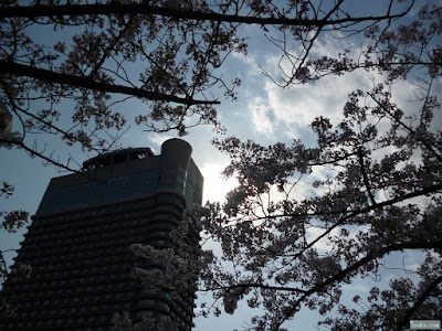 桜と太陽とビル