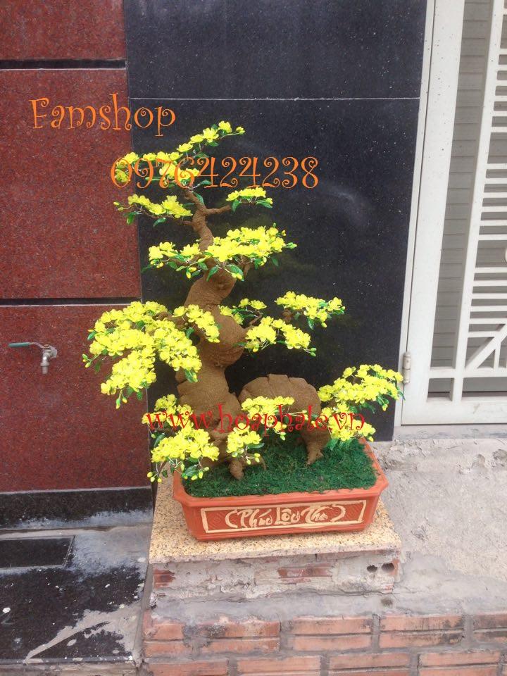 Goc bonsai mai dao the rong tai Thanh Nhan