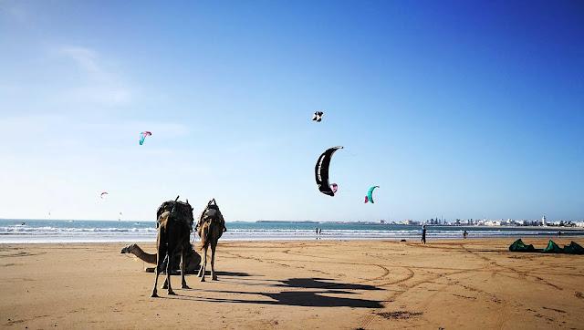 Kitesurferzy w akcji. A tuż obok relaksujące się wielbłądy. Essaouira, Maroko