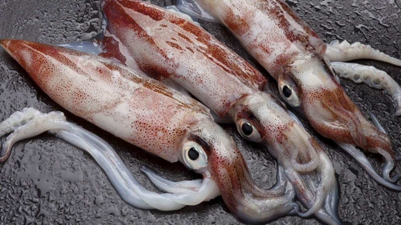 Bolehkah ibu hamil makan cumi dan kepiting?