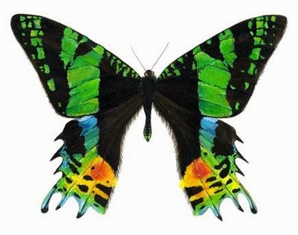 Serangga paling unik dan indah