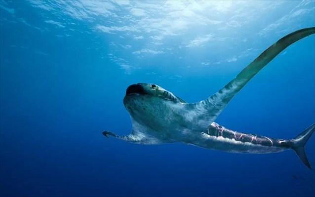 Όταν οι καρχαρίες ήταν… σαλάχια