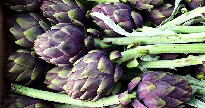 [2021] Can Dogs Eat Artichokes |  Is Artichokes Good For Dogs