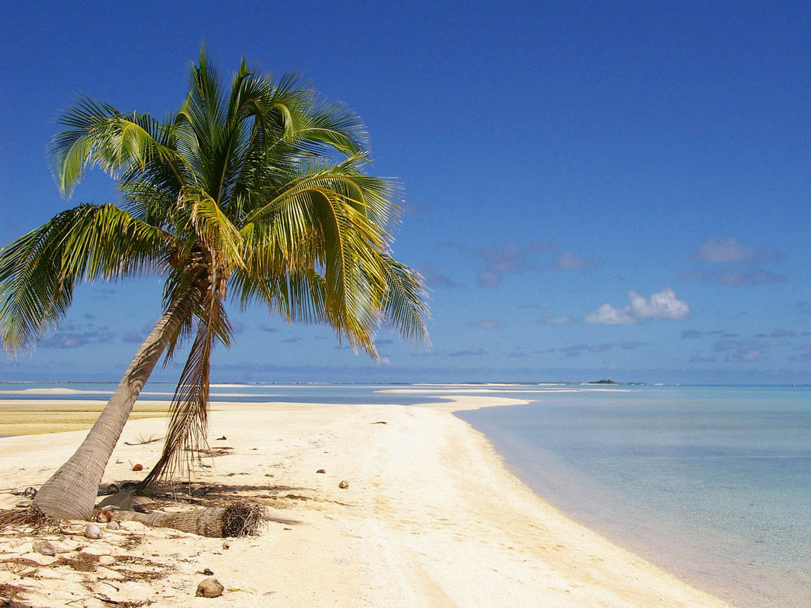 XS Wallpapers HD: Coconut Tree Wallpapers