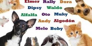 elegir nombre de perros