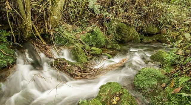 La ecología védica es una instrucción al amor universal con todos los elementos que nos rodea. 🌾
