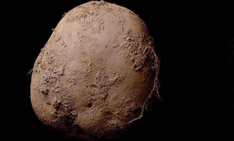 صورة لحبة بطاطس.. تباع بمبلغ مليون يورو!!