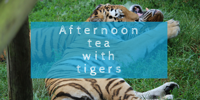 Tea with tigers and a family day out at the zoo; an afternoon experience day at Paradise Wildlife Park with Red Letter Days