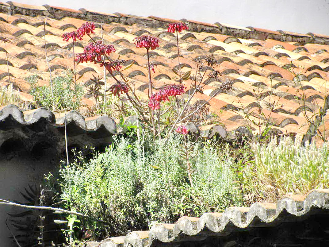 plants on the roof