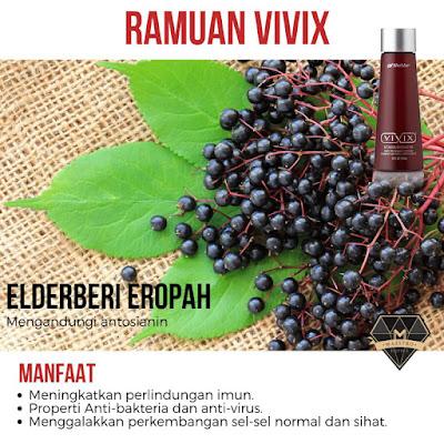 elderberry ramuan vivix