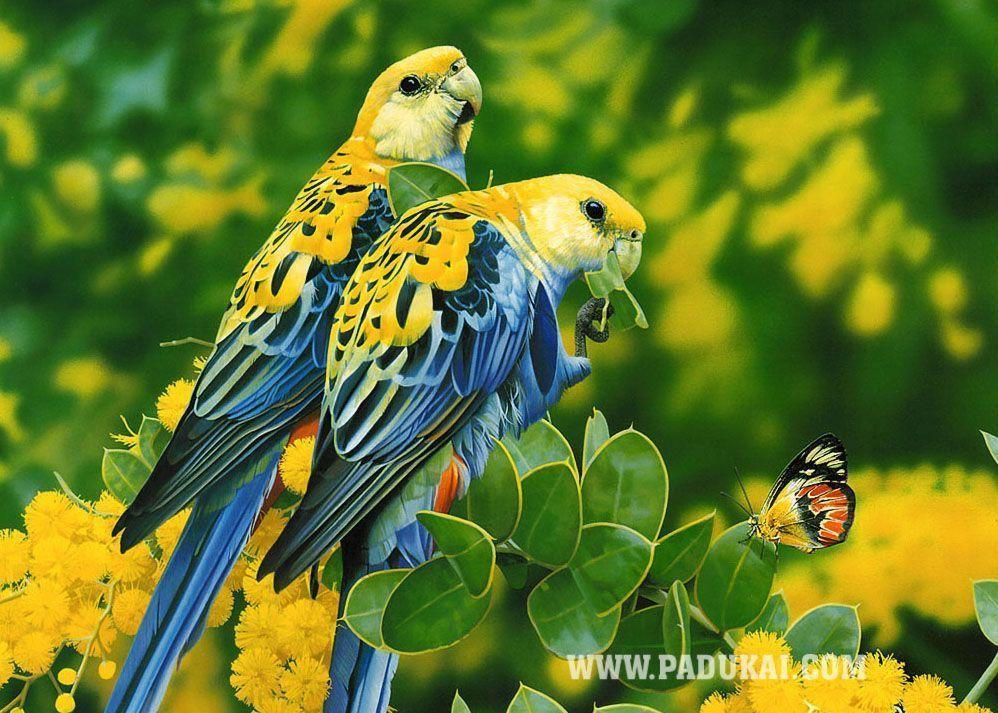 Birds Wallpapers HD wallpaper