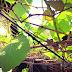 Akhirnya Pohon Anggur di Halaman Belakang Pun Berbuah Kembali!