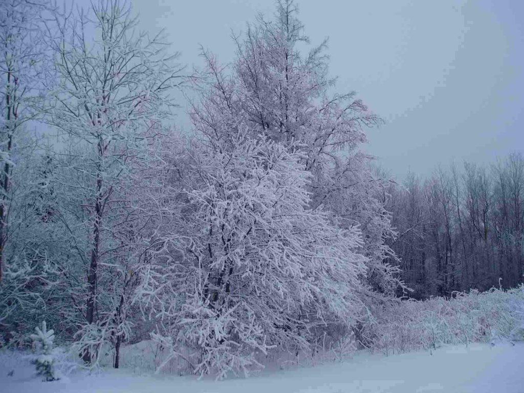 snow, though rain, sleet, and freezing rain