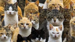 18 hechos sorprendentes sobre gatos que no conocías