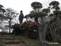 Dr. Tomitaro Makino statue, Kochi, Shikoku, Japan