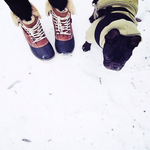 crocs snow boots, frenchie in the snow