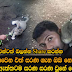 Sarana Sri Lankan Famus Cat Must Read