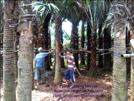 Penanaman dan Perawatan Rumput, Petani Tanaman Hias, Tukang Taman