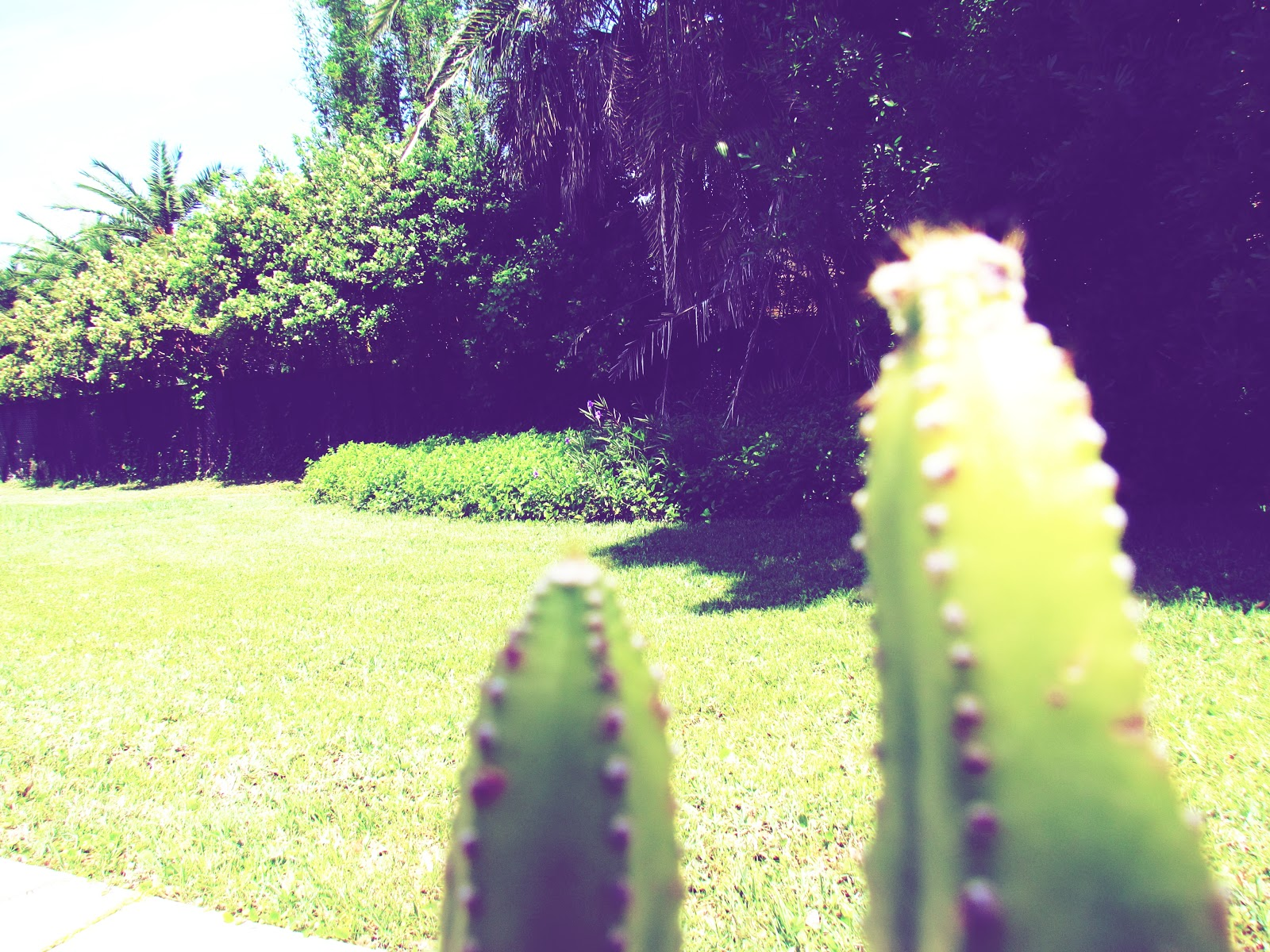 A cactus facing a backyard in the backdrop of mother nature, pet plants, cactus plants, houseplants