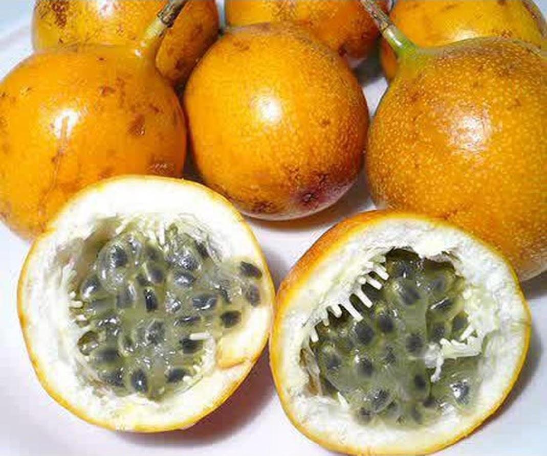 Bibit Benih Biji Buah Markisa Oren Orange Passion Fruit Kaya Manfaat Isi 10 Biji Sulawesi Tenggara