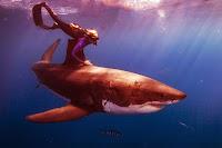 http://www.allfiveoceans.com/p/shark-wallpaper.html