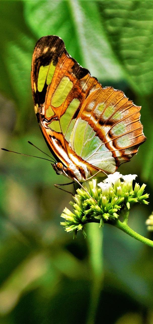 An elegant butterfly.