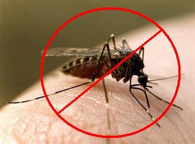 Αποτέλεσμα εικόνας για κουνουπια φωτο