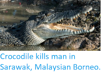 https://sciencythoughts.blogspot.com/2019/10/crocodile-kills-man-in-sarawak.html