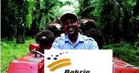 UNSP Rugi PT Bakrie Sumatera Plantations Tbk (UNSP) Semakin Menjadi