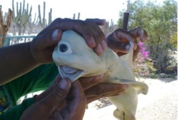 سمكة قرش غريبة بعين واحدة يبدو مثل مخلوق من أسطورة قديمة  | موقع عناكب